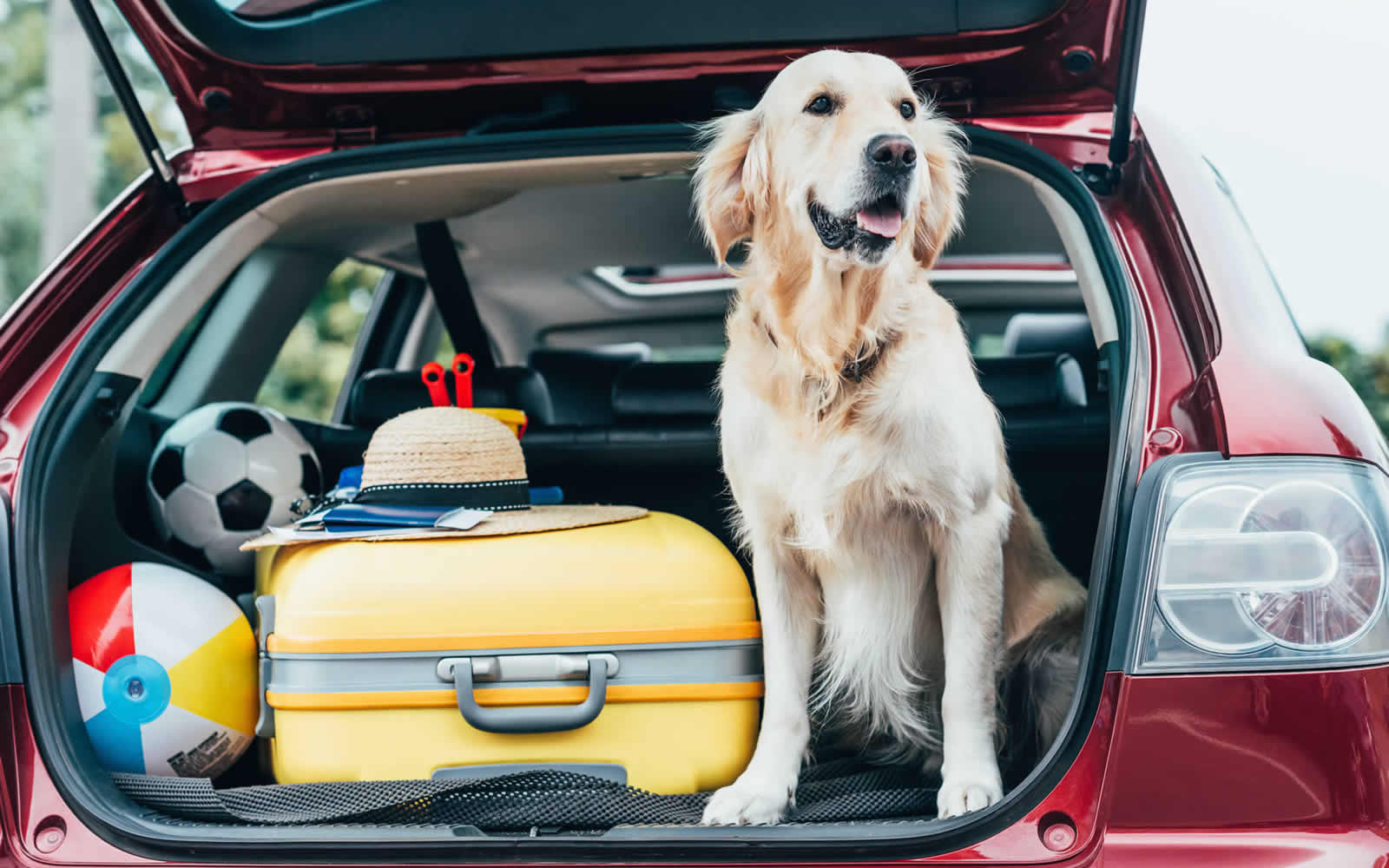 Image result for dog and luggage in boot
